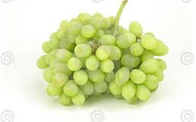 Thompson seedless grape 1 gallon vines fruit grapes for Table grapes zone 6