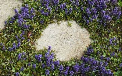 Gap And Crevice Filling Groundcover Plants