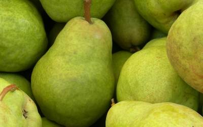 Shop Barlett Pear - 3 Gallon