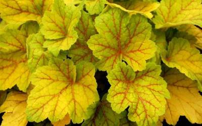 Buy Terra Nova Plant Collection Online