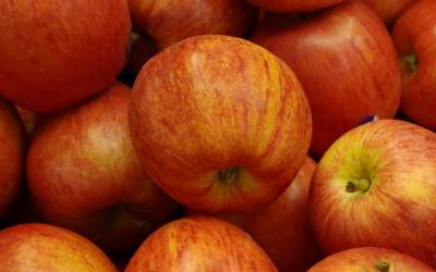 Shop Royal Gala Apple - 5 Gallon