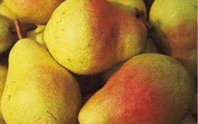 Shop Moonglow Pear - 5 Gallon