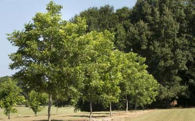 Shop Oconee Pecan - 5 Gallon