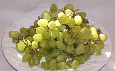 Shop Thompson Seedless Grape  - 1 Gallon